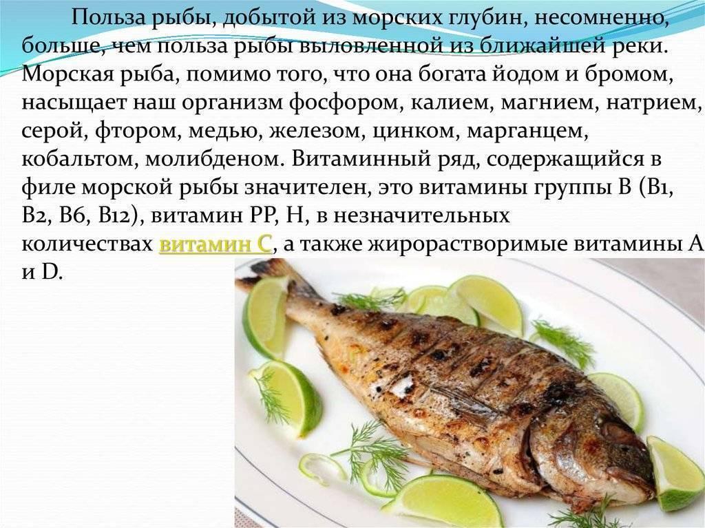 Рыба налим — польза и вред | польза и вред