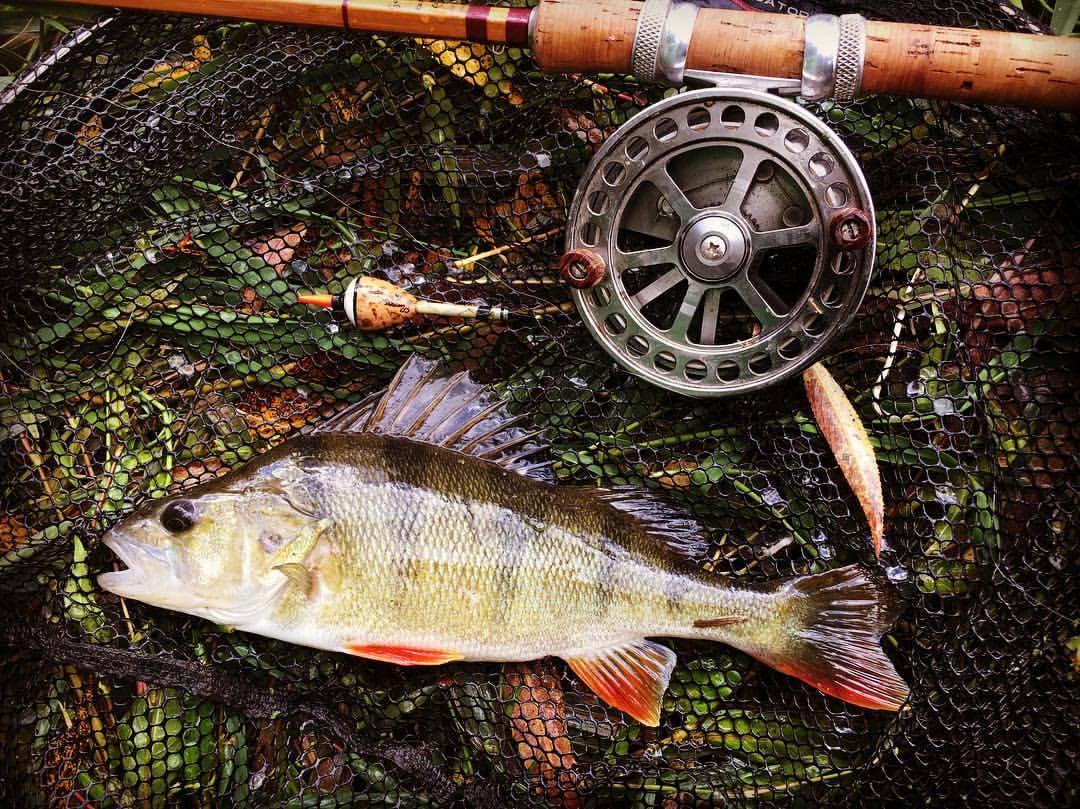 Ловля окуня на спиннинг осенью: как ловить, лучшие приманки для рыбалки