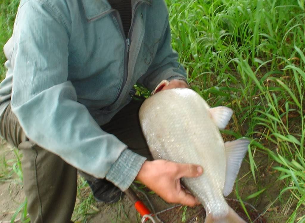 Ловля рыбы на пенопласт: почему клюет, что важно знать, снасти