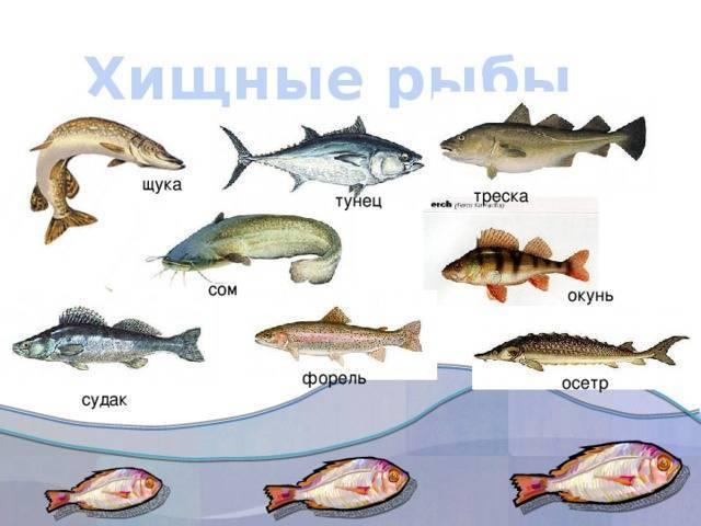 Представители группы рыбы: описание, фото и их особенности