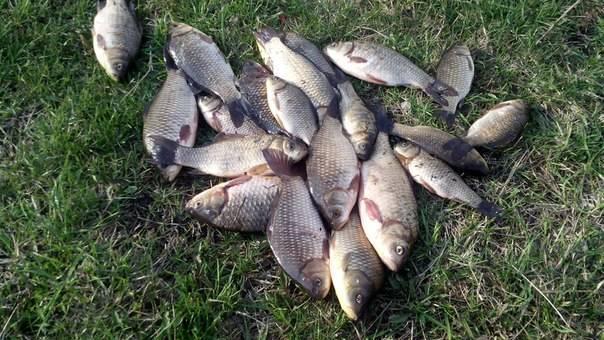 Рыбалка в липецкой области: водоемы и особенности рельефа, лучшие места и советы по прикорму