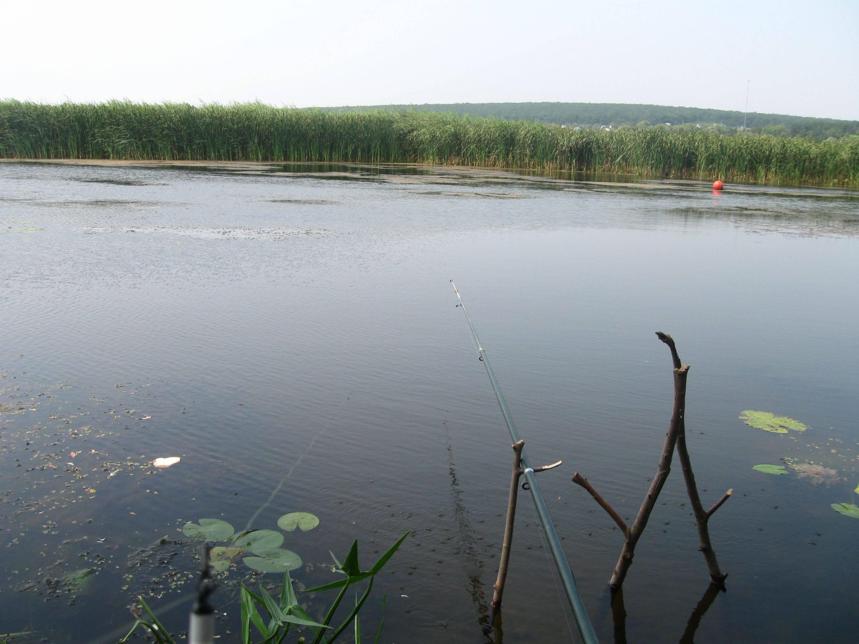 Как поймать линя на поплавочную удочку летом, какие использовать наживки