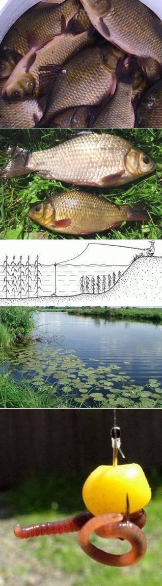 Когда можно начинать ловить карася весной - советы бывалых рыбаков