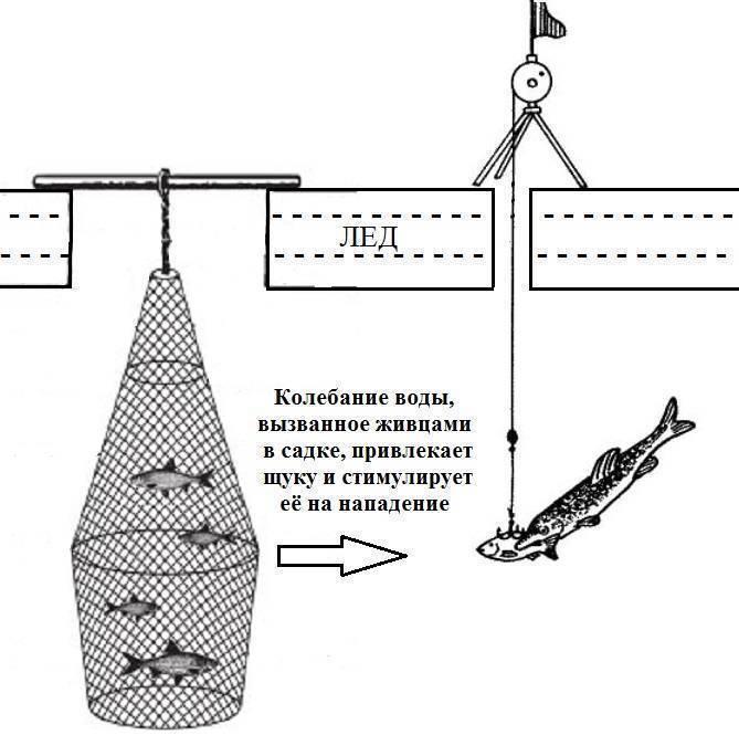 Ловля щуки на живца: снасти, оснастка и техника ловли