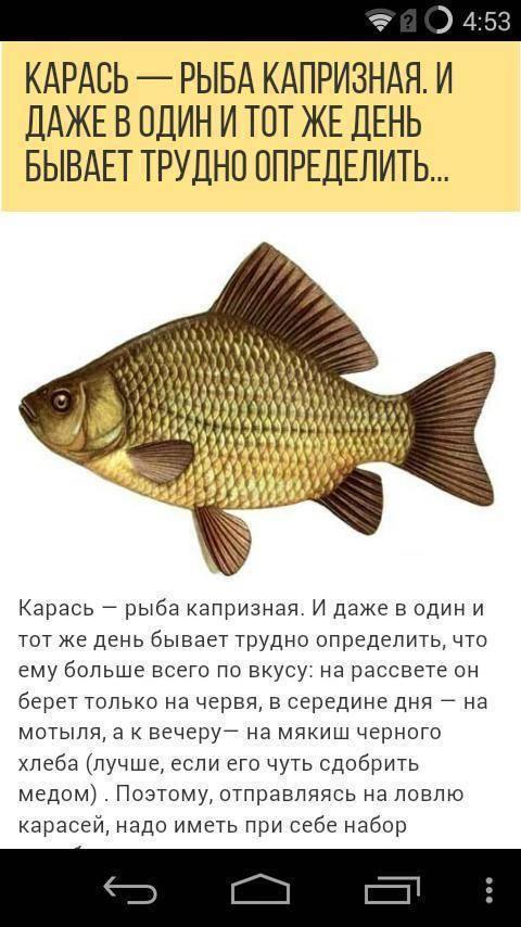 Как выбрать место для рыбалки?