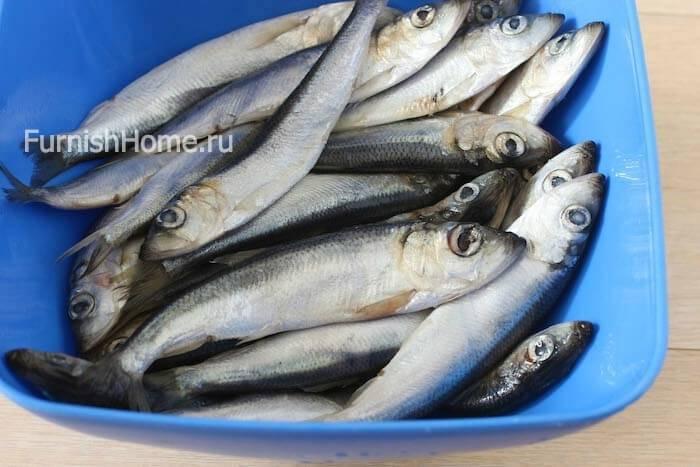 Балтийская сельдь или салака: какова польза и вред рыбки, правила ее приготовления и употребления