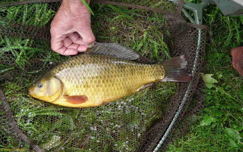 Тактика фидерной рыбалки весной на карася