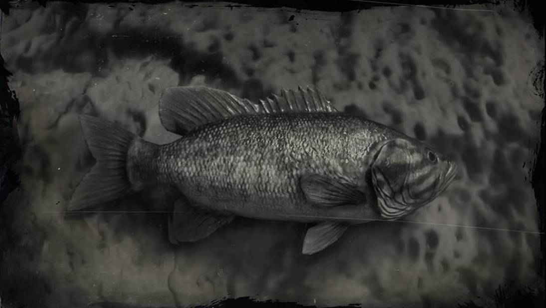 Уникальная рыба с прозрачной головой — малоротая макропинна / бочкоглаз | science debate