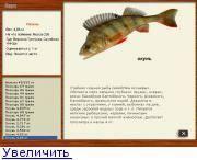 На что ловить окуня: на какие наживки лучше клюет рыба, выбор снастей