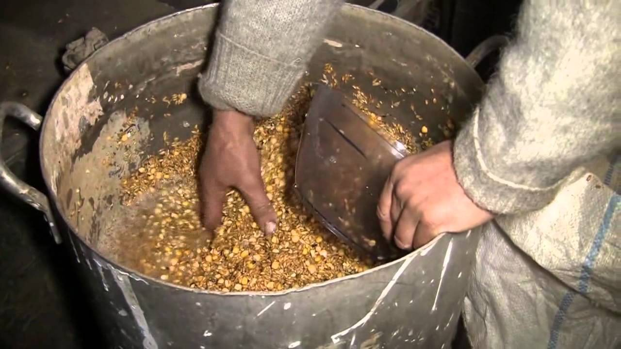 Пшеница для рыбалки - ферментированная, как запарить и как приготовить