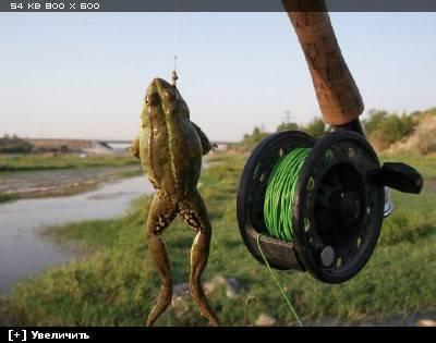 Способы ловли рыбы на лягушку. конструкция приманки