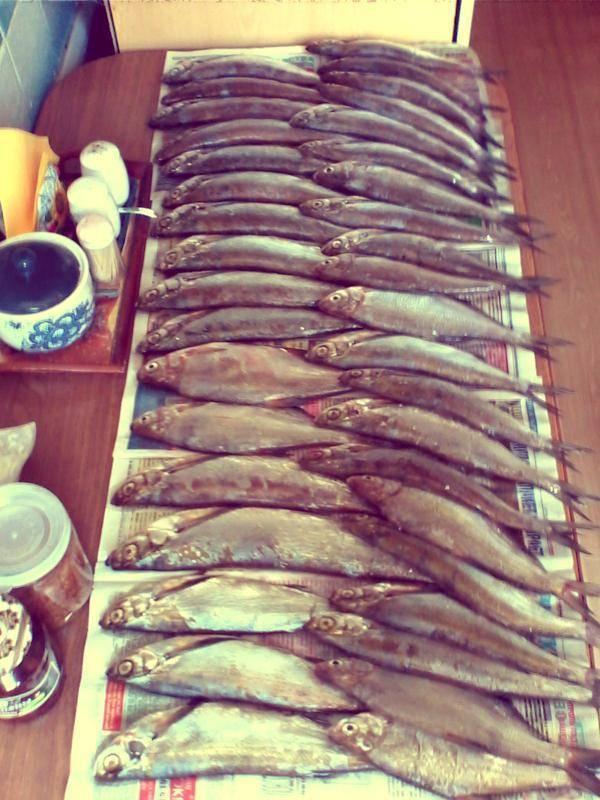 Как правильно завялить рыбу в домашних условиях, как засолить