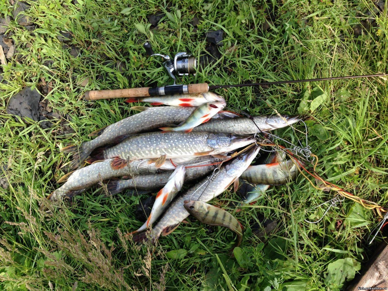 Платная рыбалка в рыбном хозяйстве раково — цены и правила