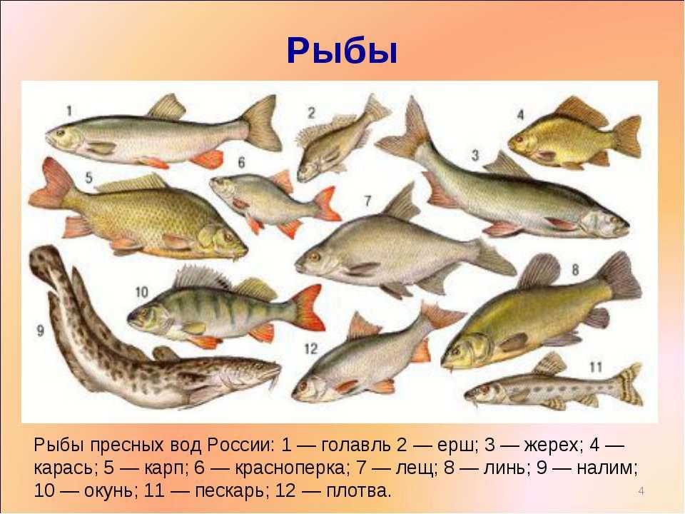 Аквариумные рыбки и их болезни