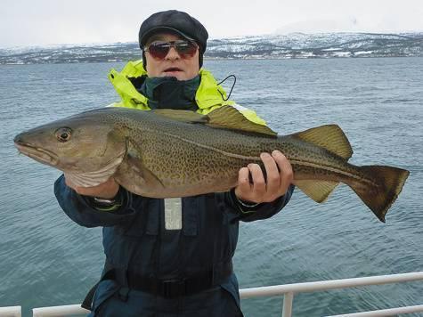 Рыба треска: где обитает и как выглядит эта ценная морская рыба, классификация и особенности образа жизни