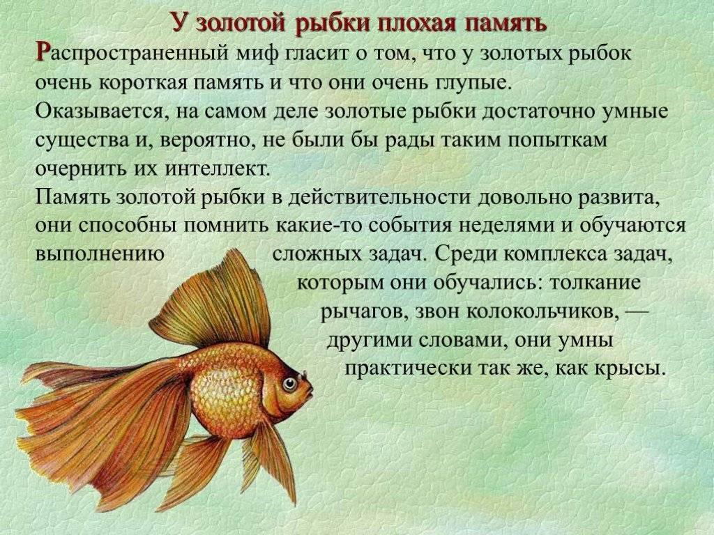 Память у рыб: сколько секунд длится, могут ли рыбы запоминать события