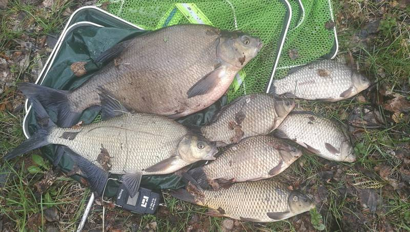 Ловля леща осенью на фидер, особенности осенней рыбалки на реке