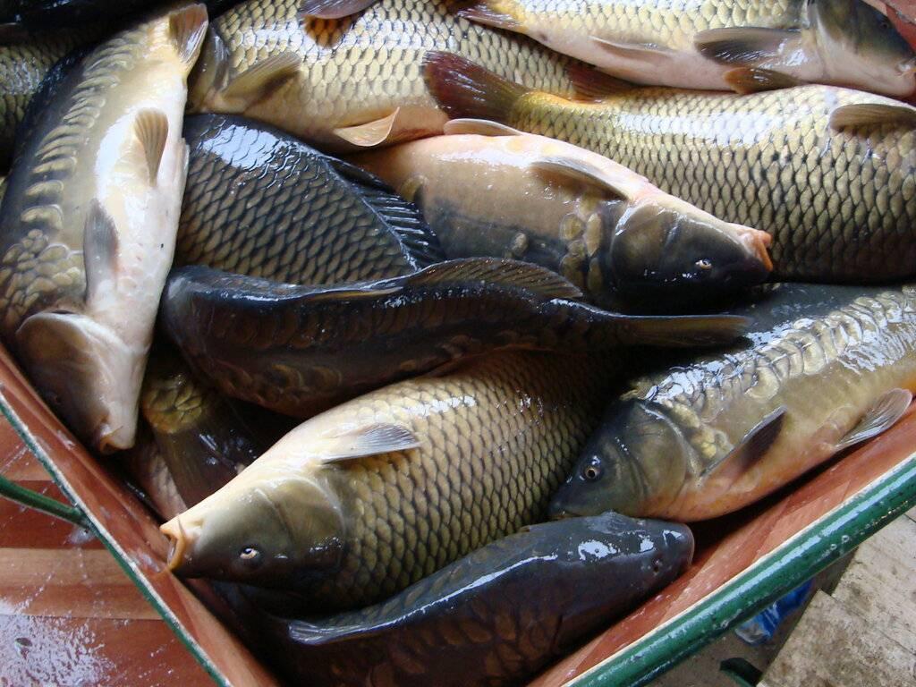 Рыбалка в щёлковском районе московской области, как ловить на сиваше, ледовском озере, орловском карьере