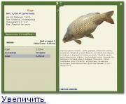 Золотой карась: особенности и отличия от других подвидов