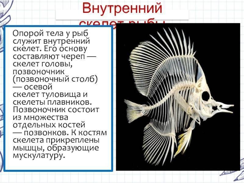 Может ли рыба помнить, и сколько длятся мысли золотой рыбки в аквариуме: эксперименты с памятью