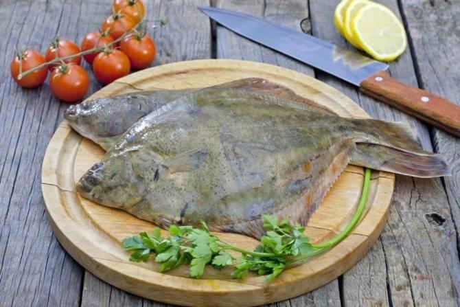 Морской язык: что это за рыба, как выглядит, рецепты, польза и вред
