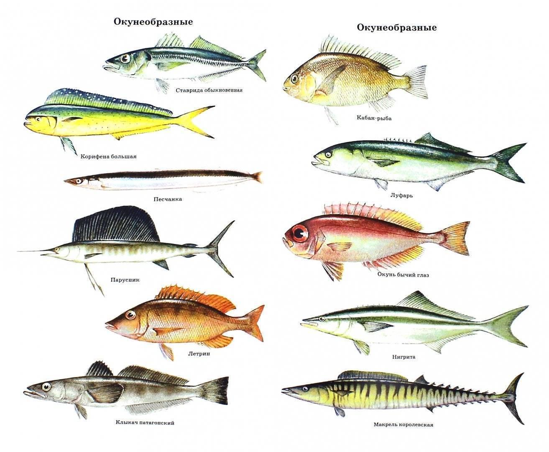 Морские рыбы: список, виды морских рыб и их названия