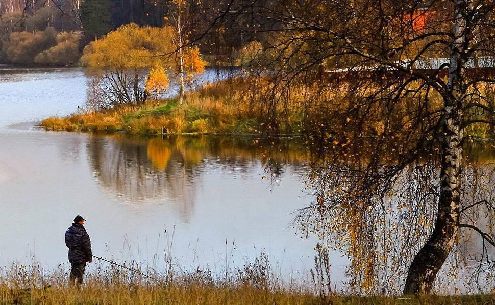 Ловля судака осенью на спиннинг ночью джигом | приманки, места