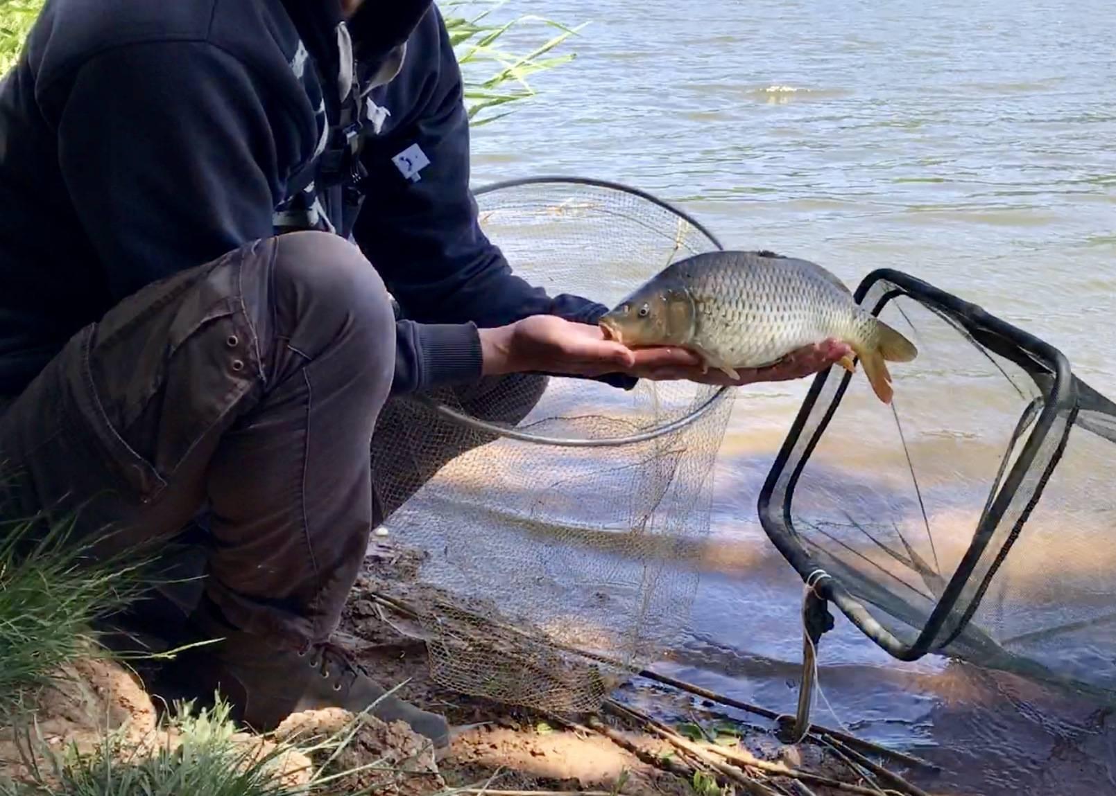 Пикерный подход к крупному карасю - спортивное рыболовство