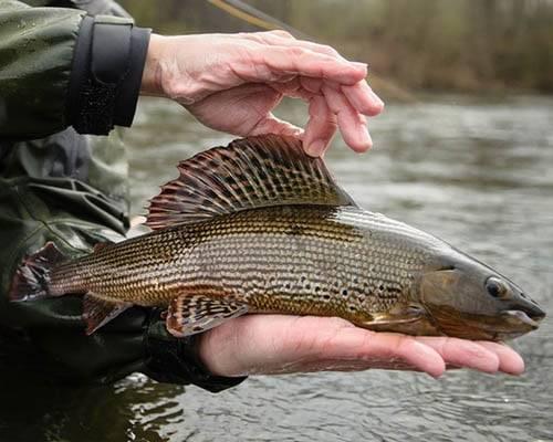 Платная рыбалка раково — про рыбалку