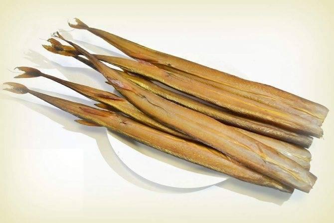 Луфарь черноморский: что за рыба, описание и рецепты