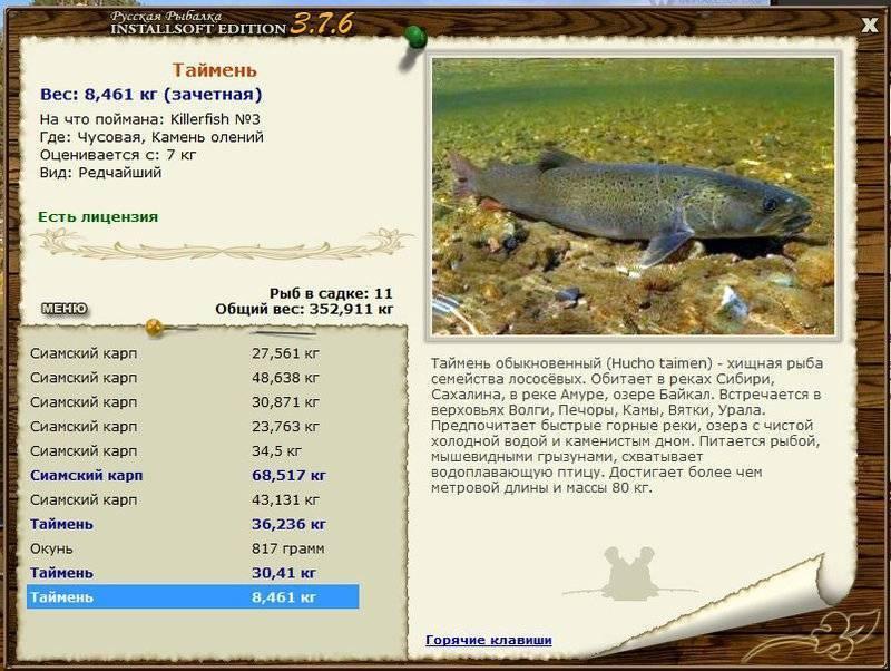 Сом это морская рыба или речная рыба
