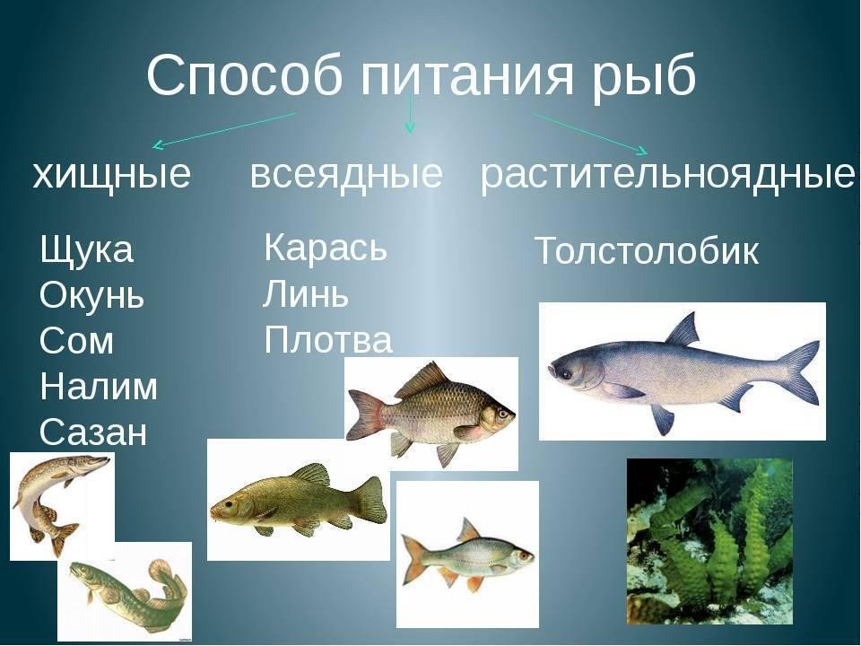Рыбы-соседи