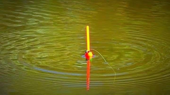 Ловля карася на поплавочную удочку – основные моменты