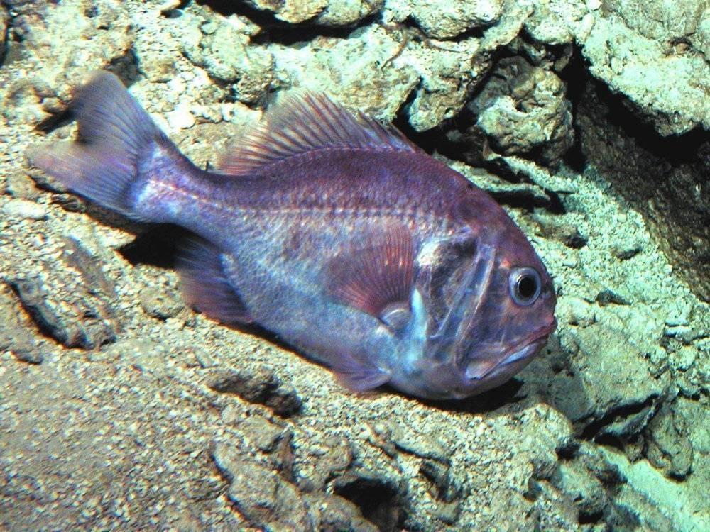 Сарган (garfish) — описание, как ловить и на что