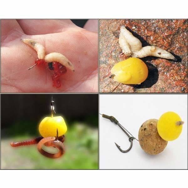 На что ловить карпа: на какие наживки лучше клюет, рецепты приманок