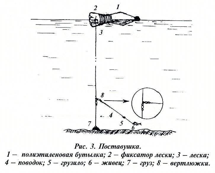 Как ловить щуку на живца – выбор приманки, техника и особенности ловли