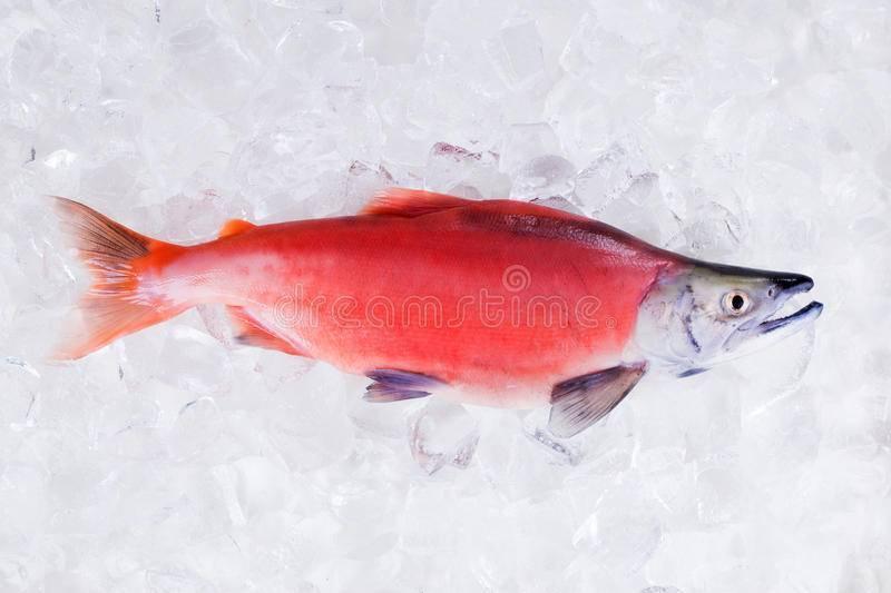 Что за рыба нерка: цена, полезные свойства, описание