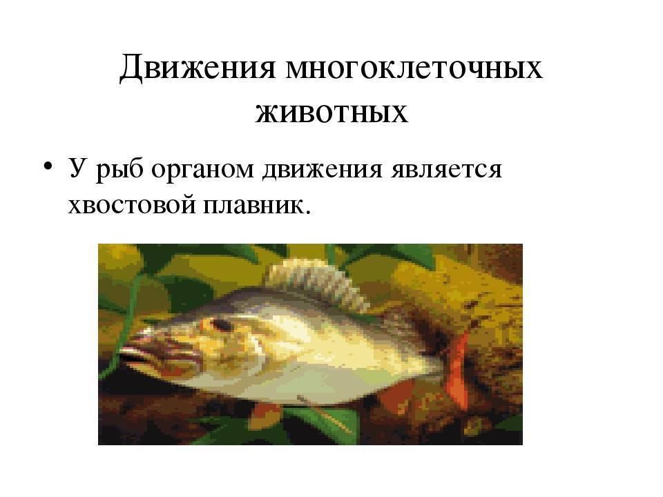 Какая память у рыб - особенности сохранения информации