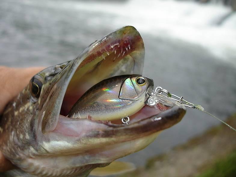 Как правильно рыбачить на спиннинг