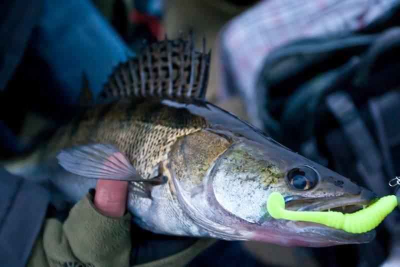 Рыбалка на спиннинг | спиннинг клаб - советы для начинающих рыбаков ловля судака ночью на спиннинг: секреты и тонкости