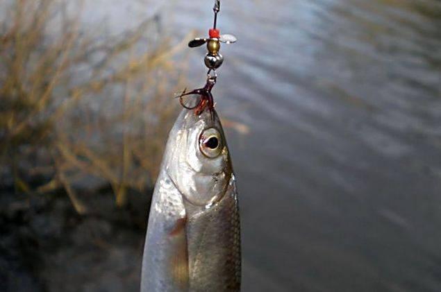 Ловля уклейки – снасти и способы ловли