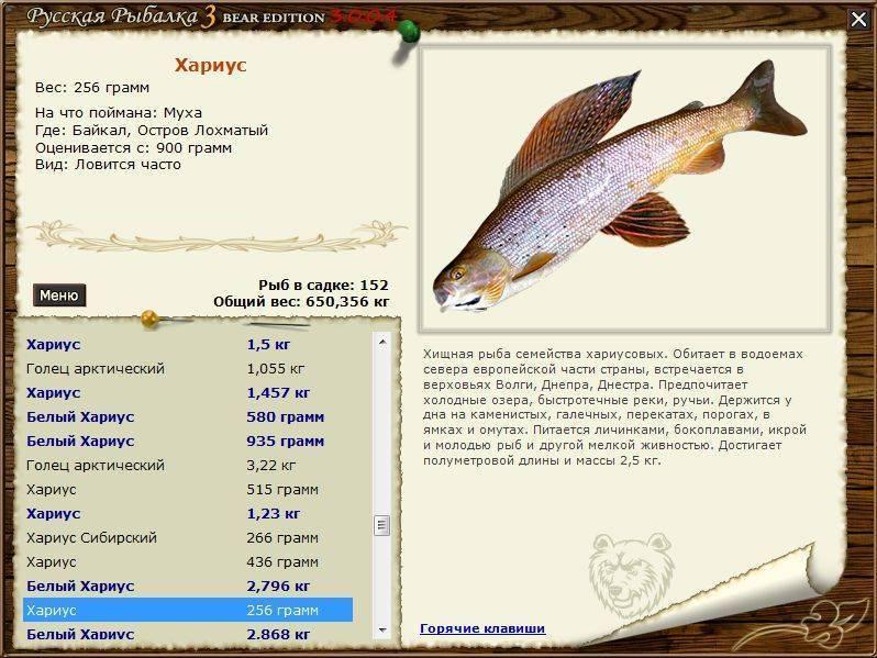 Ловля карпа, и другая рыбалка.