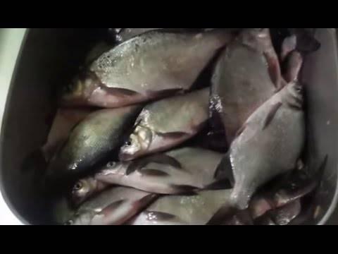 Рыбалка в могилеве на реке днепр