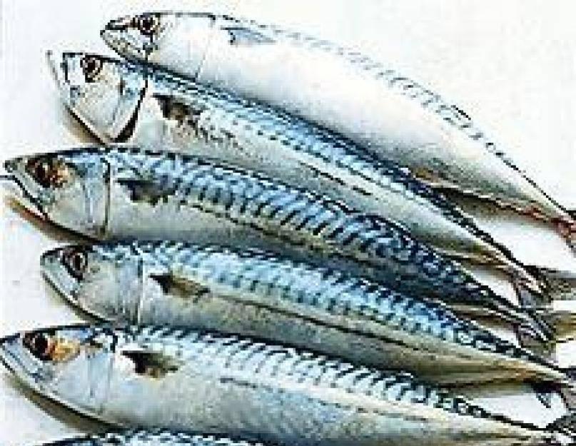Макрель: что за рыба, где водится