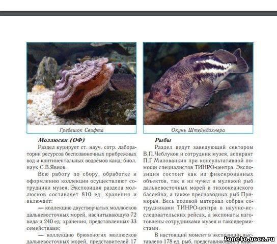 Севастопольский морской аквариум, фото интересных рыб