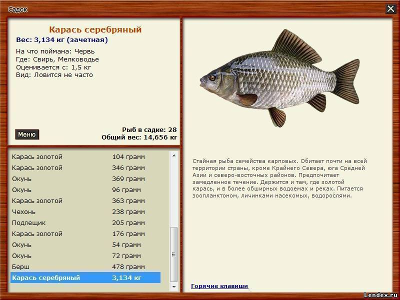 Какая рыба водится в водоёме?