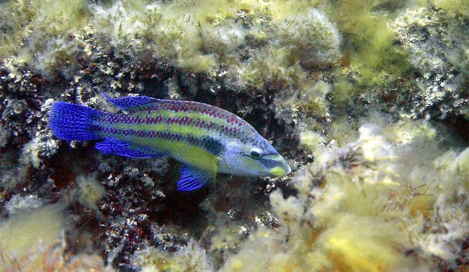 Рыбы черного моря - названия видов, фото и описание — природа мира