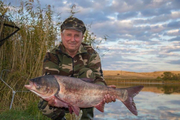 Что за рыба толстолобик: описание, калорийность и польза