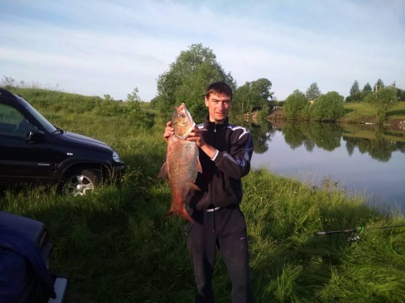Firstfisher.ru – интернет-журнал о рыбалке и рыболовах. платная рыбалка в тульской области