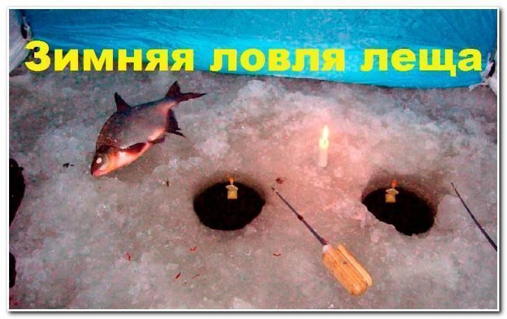 Поплавочная рыбалка ночью – рыбалке.нет